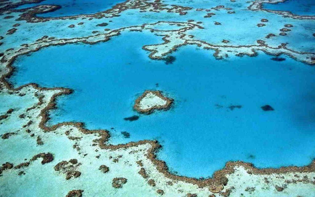 protection des coraux